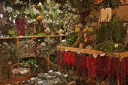 Recolección, secado y conservación de las plantas.